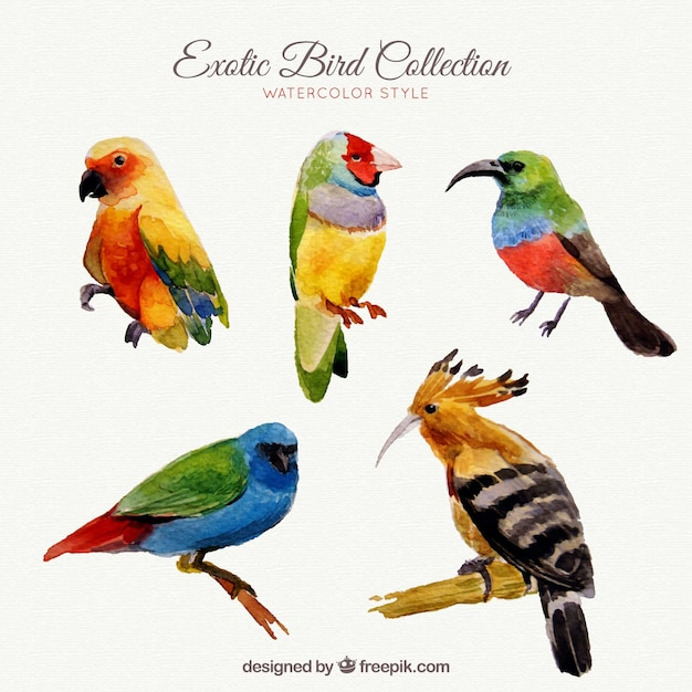 Exotic birds collection in watercolor\ style