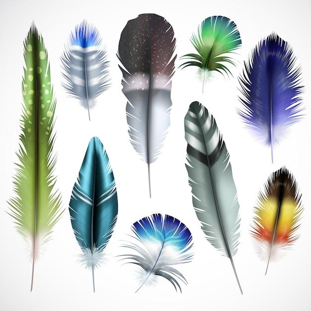 Экзотические птицы природные окрашенные пятнистый зеленый фиолетовый блестящий бирюзовый микс цветные перья реалистичный набор изолированных векторные иллюстрации Бесплатные векторы