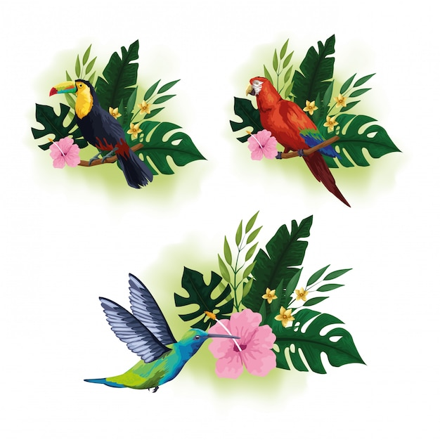 Exotic birds and tropical fauna Free Vector