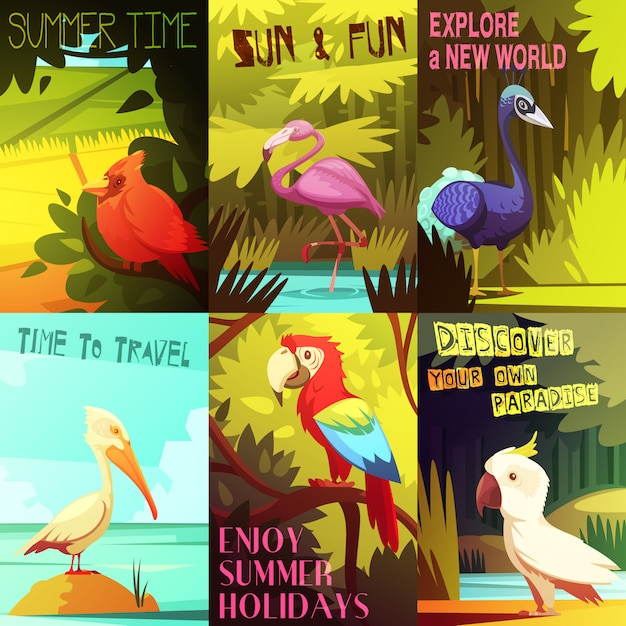 Exotic colorful birds 6 posters composition with cockatoo parrot  pelican and flamingo Free Vector