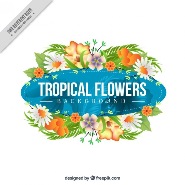 Exotic flowers decoration background