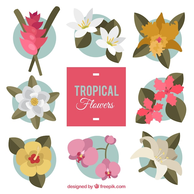 Exotic flowers with leaves pack
