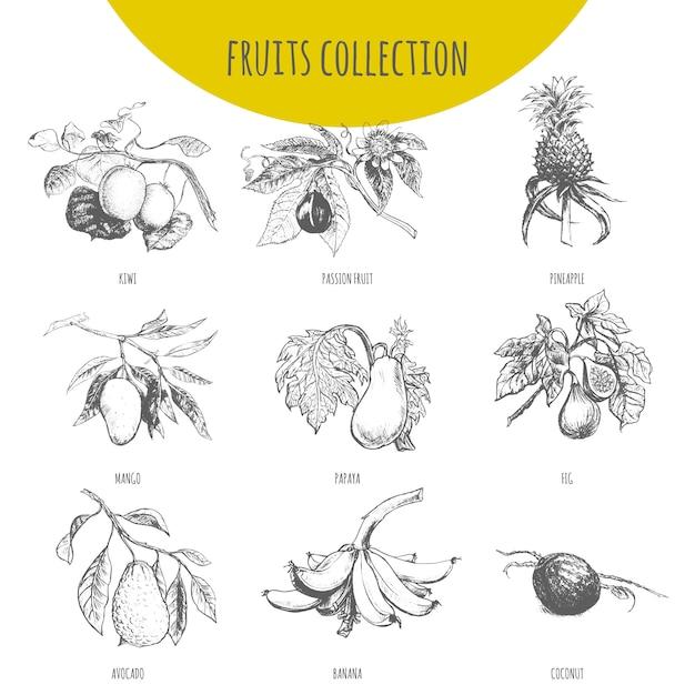 エキゾチックなフルーツ植物イラストスケッチセット Premiumベクター