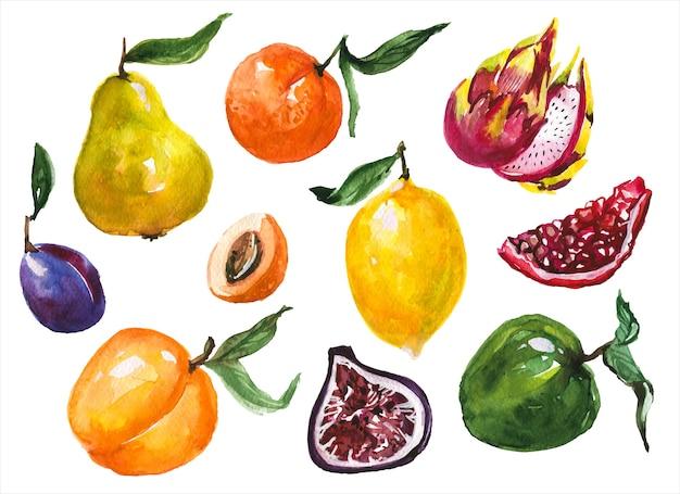 Набор экзотических фруктов рисованной акварель иллюстрации. яблоко и груша, слива и гранат, цитрусовые на белом фоне. кисло-сладкие тропические фрукты без косточек, акварель, набор картин Premium векторы