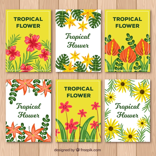 Exotic tropical flower card collection