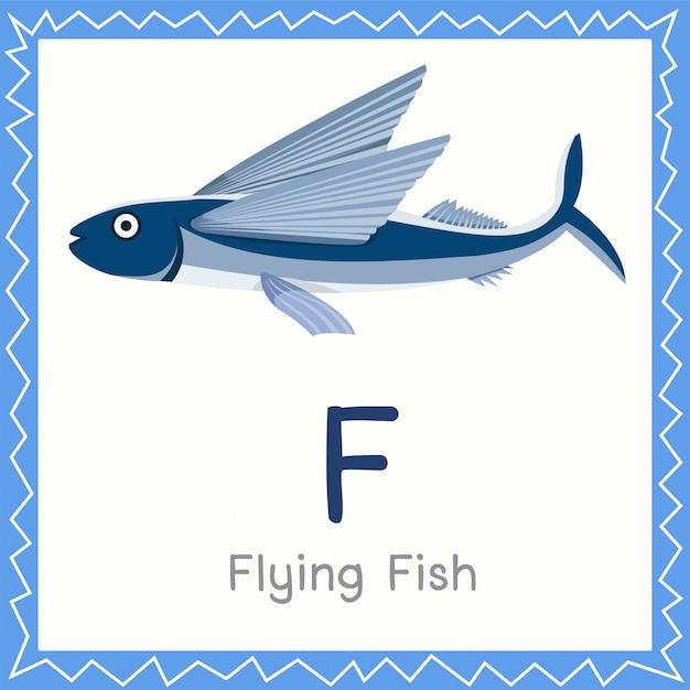 Иллюстратор f для летучей рыбы животное Premium векторы
