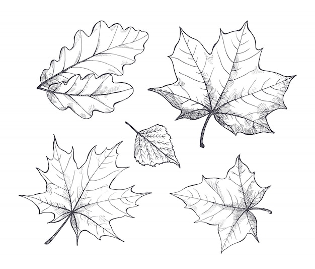 Fall autumn season leaves sketch outline vector Premium Vector