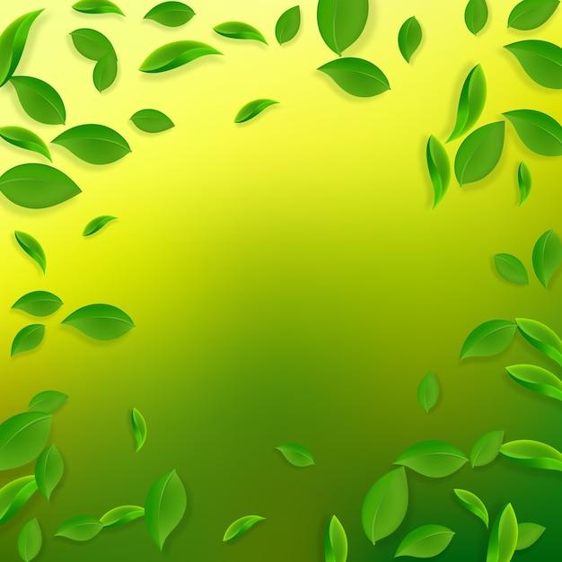 落ちてくる緑の葉。新鮮な茶葉が飛んでいます。 Premiumベクター