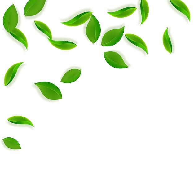 落ちてくる緑の葉。新鮮なお茶のきちんとした葉が飛んでいます。 Premiumベクター