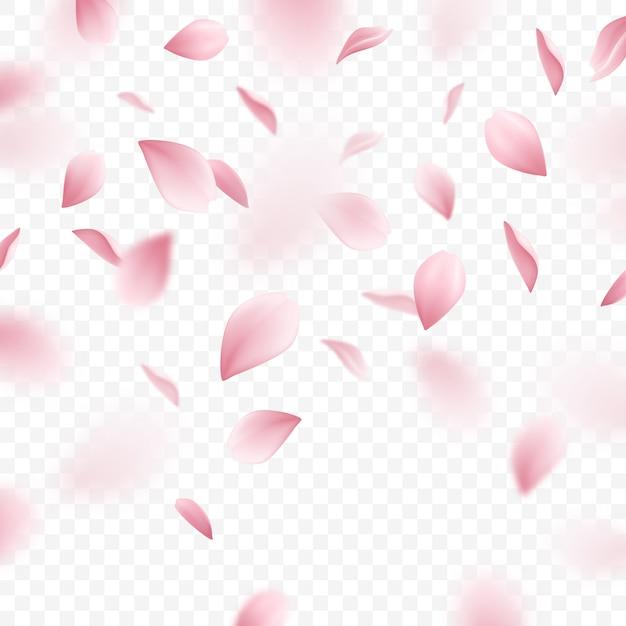 떨어지는 핑크 사쿠라 꽃잎 현실적인 그림 무료 벡터