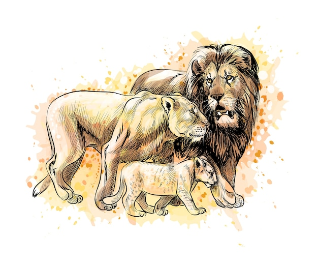 Family of lions from a splash of watercolor, hand drawn sketch.  illustration of paints Premium Vector