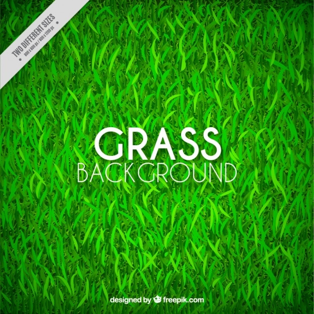 Fantastic grass background