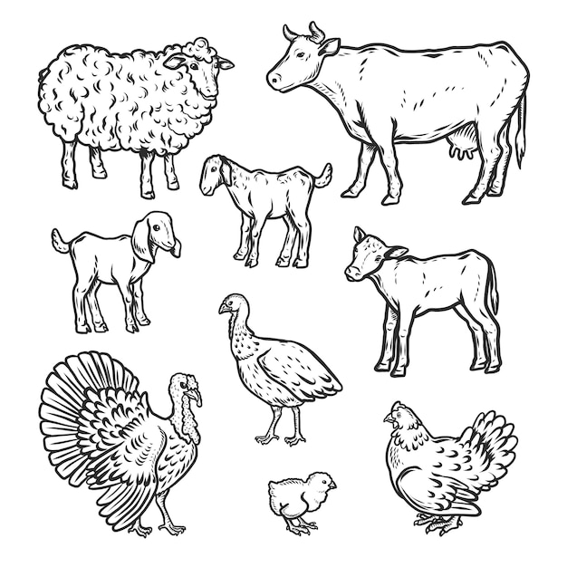 Farm animals detailed icon set Premium Vector