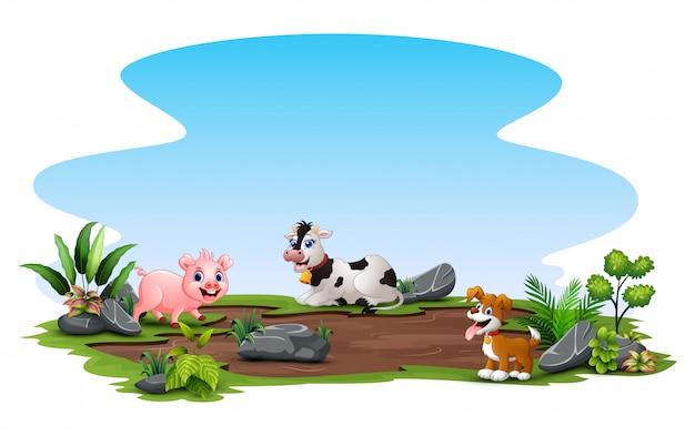 外で自然を楽しむ家畜 Premiumベクター