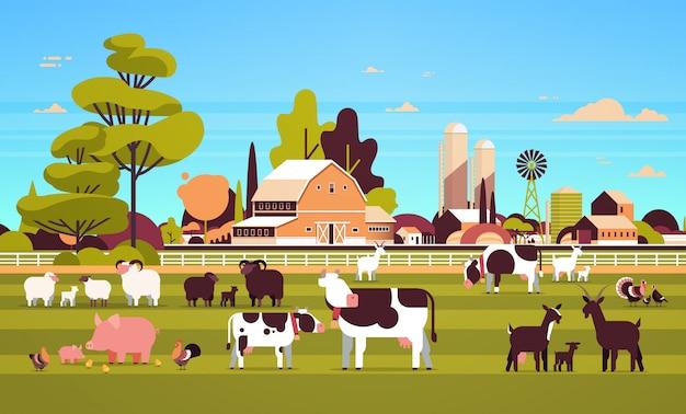 Домашний скот выпас корова коза свинья индейка овца курица разные домашние животные разведение сельское хозяйство ферма сарай сельский пейзаж Premium векторы