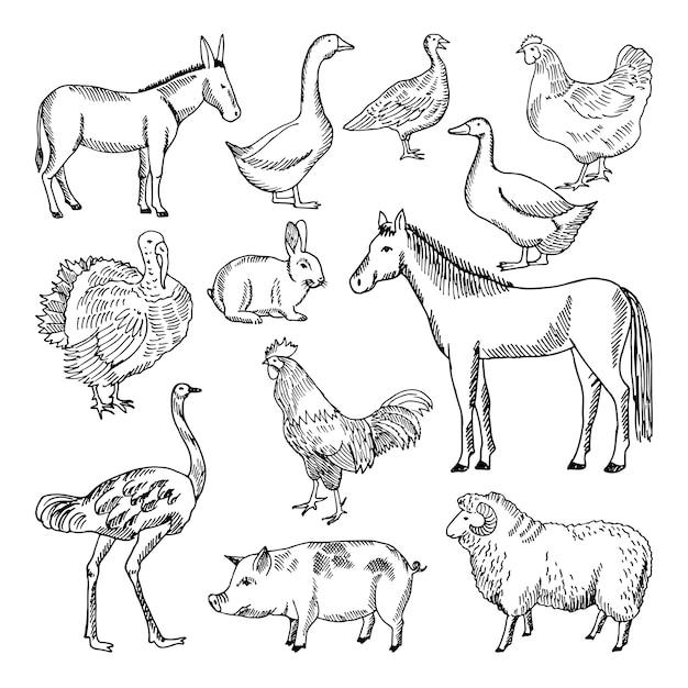 농장 동물 손으로 그린 스타일을 설정합니다. 삽화. 동물 농장 스케치 거위와 어린 양, 돼지와 말 프리미엄 벡터