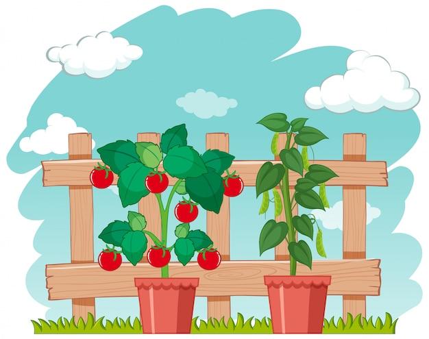 Ферма сцена с выращиванием свежих овощей Бесплатные векторы