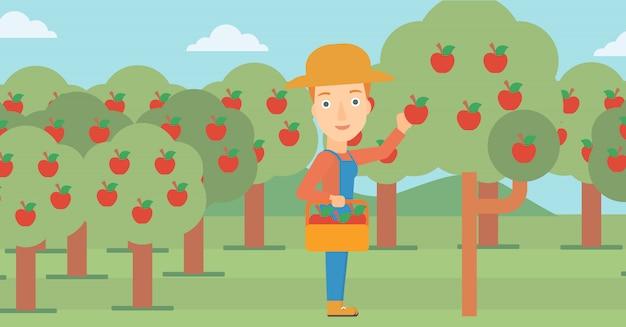 Farmer collecting apples Premium Vector