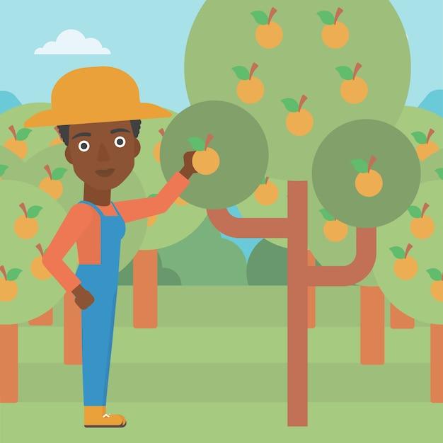Farmer collecting oranges Premium Vector