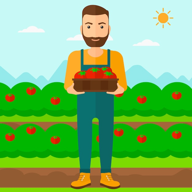 Farmer collecting tomatos. Premium Vector