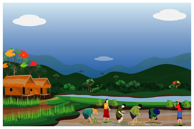 Farmer transplant rice seeding in paddy field vector design Premium Vector
