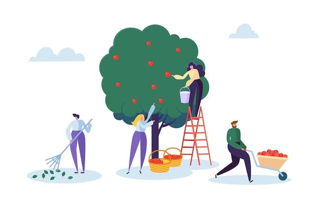 Женщина-фермер собирает урожай яблони с лестницей. персонаж собирает спелые органические фрукты с зеленого натурального дерева. деревенский сад фермы пейзаж плоский мультфильм векторные иллюстрации Premium векторы