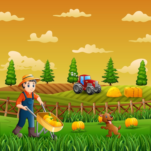 A farmers harvesting pumpkins in the farm Premium Vector