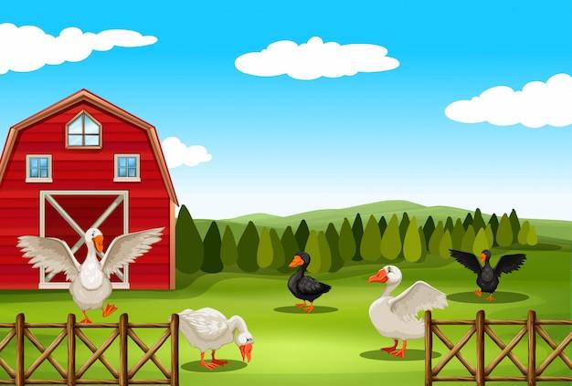 Сельскохозяйственный ландшафт Бесплатные векторы