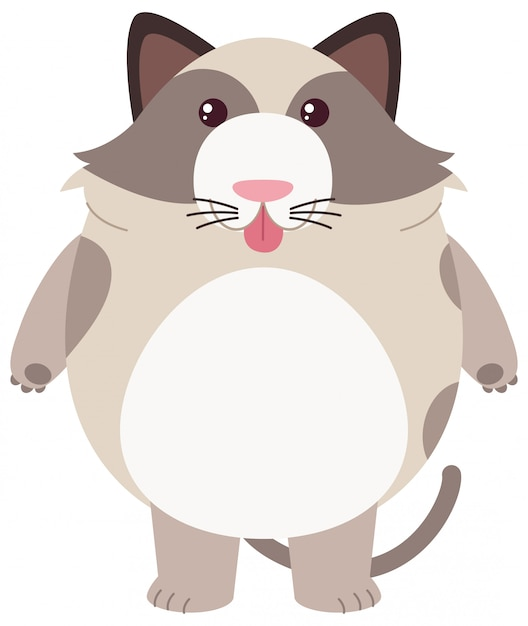 Fat cat on white background Free Vector