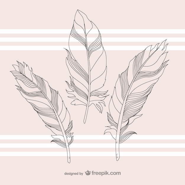 Feathers illustration Free Vector
