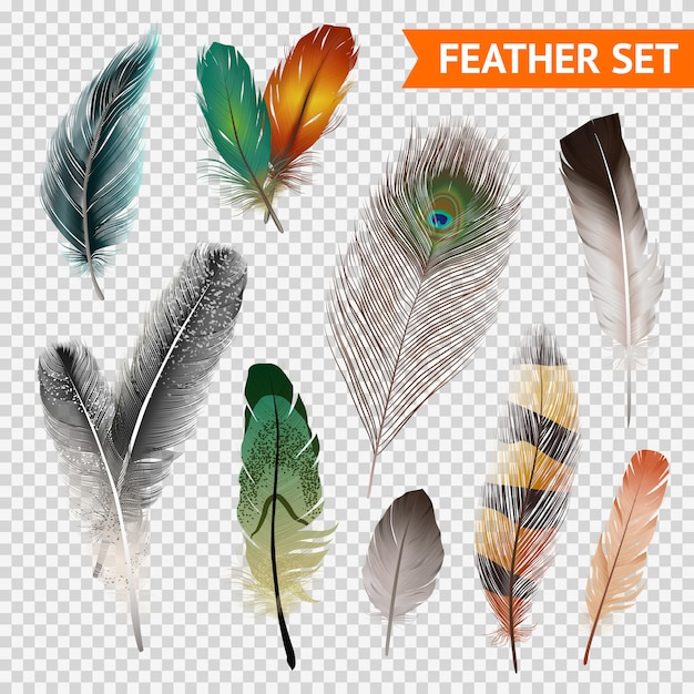 Feathers realistic set Free Vector