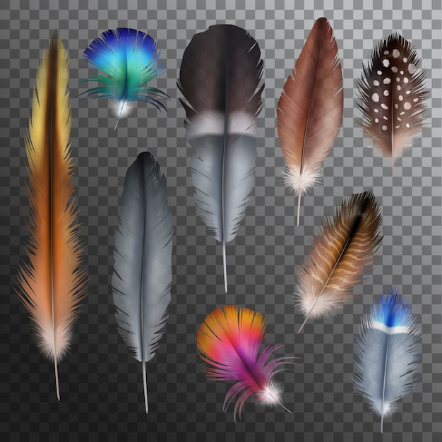 Feathers realistic transparent set Free Vector