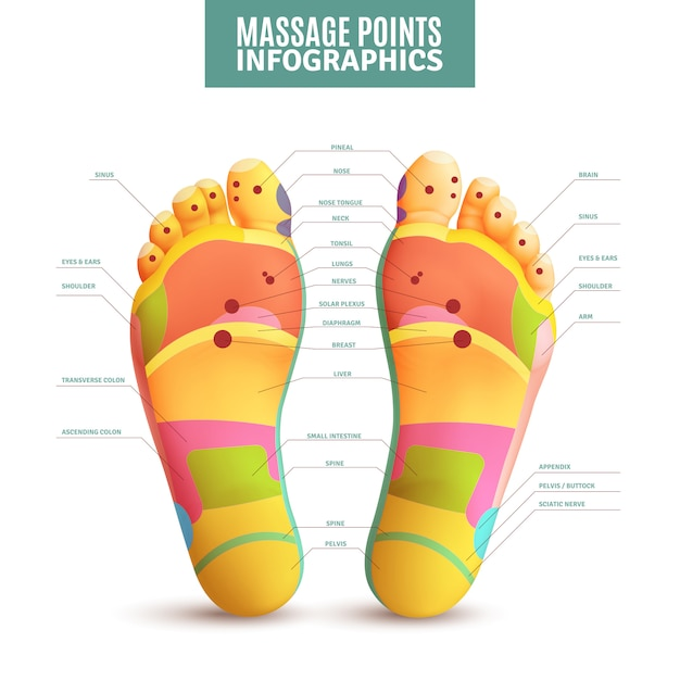 Feet massage points infographics Free Vector