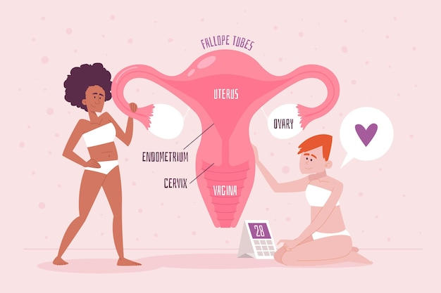 Female reproductive system concept detailed Free Vector