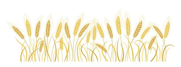 フィールド漫画小麦小穂熟した金の耳、農業のシンボル小麦粉の生産 Premiumベクター