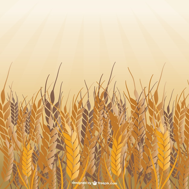 Field of wheat vector Free Vector