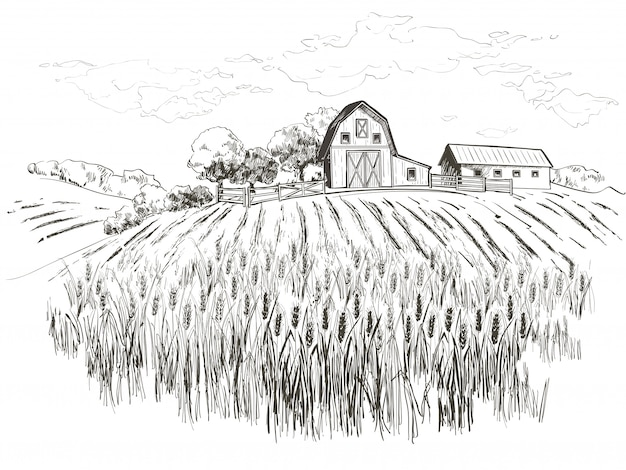 Field of wheat Premium Vector