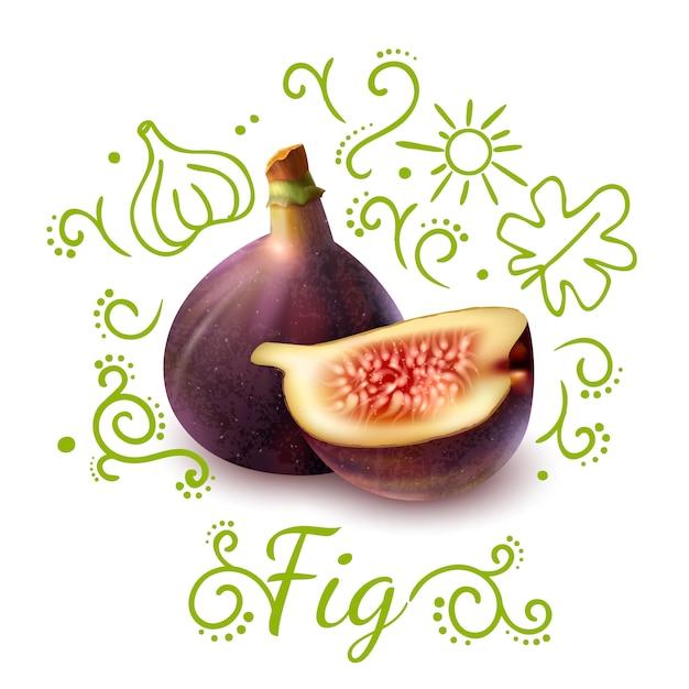 Композиция из экзотических фруктовых рисунков из инжира Бесплатные векторы