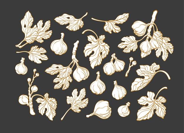 Набор растений инжира Premium векторы