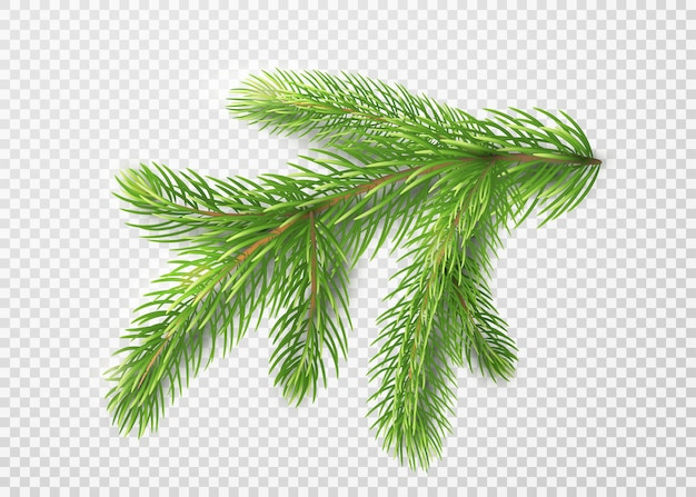 Fir branch. christmas tree decoration, pine needles isolated Free Vector