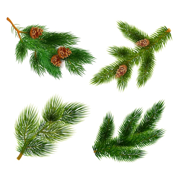 Fir and pine trees branches icons set Free Vector