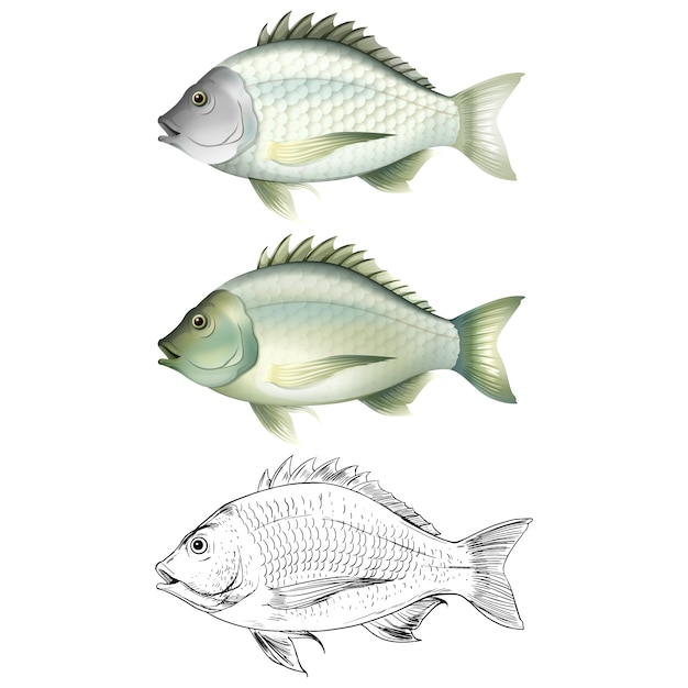 Fish designs collection Free Vector