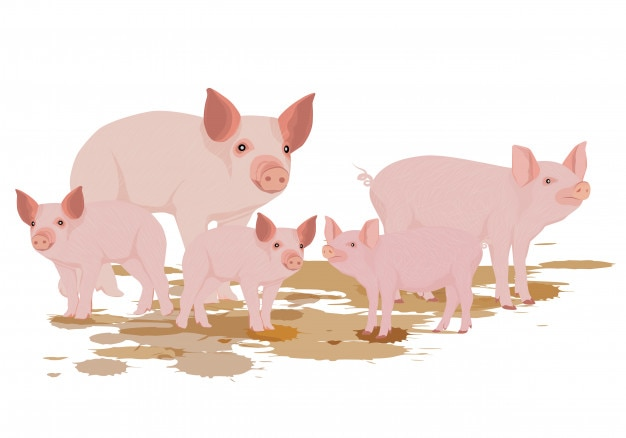 Five pig vector design Premium Vector