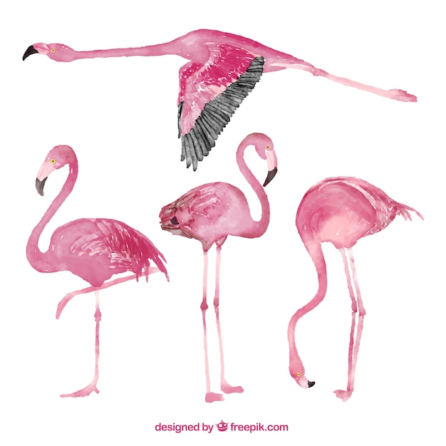 Flamingo collection in watercolor style Free Vector