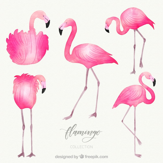 Flamingos collection with different postures in watercolor style Free Vector