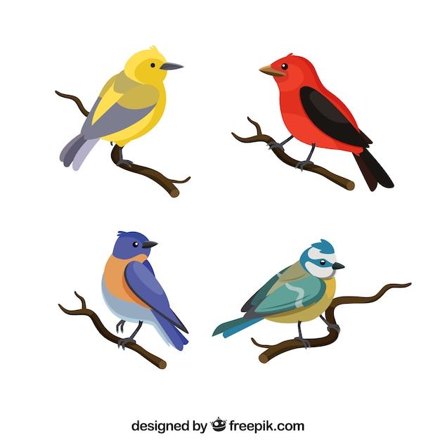 Коллекция плоских птиц Бесплатные векторы