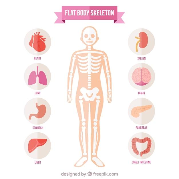 Flat body skeleton Free Vector