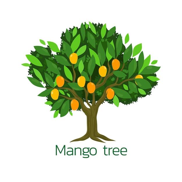 Flat design illustration mango tree Free Vector