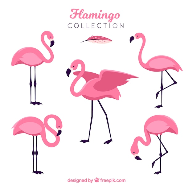 Flat flamingos collection in different poses Free Vector