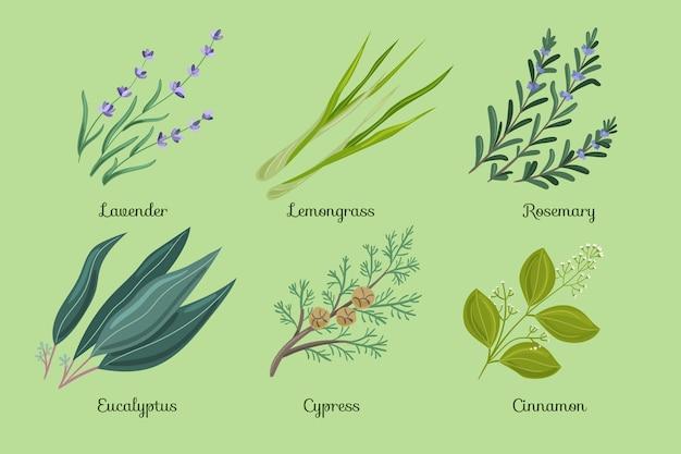 Set di erbe aromatiche con olio essenziale a mano piatta Vettore gratuito